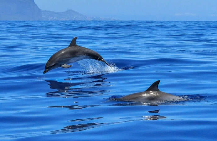 Go for dolphin and whale watching