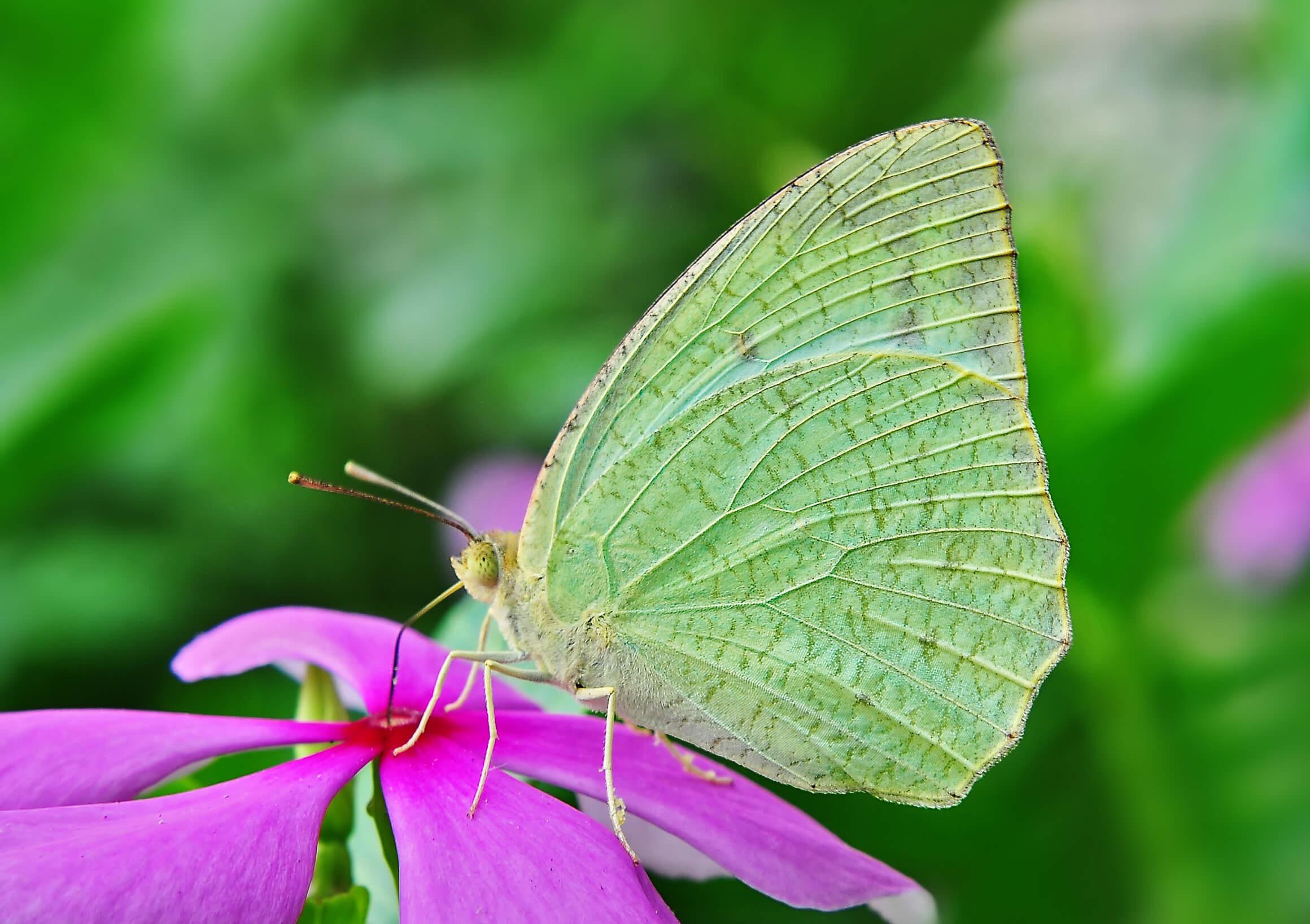 Hambantota: Explore Ridiyagama Safari Park