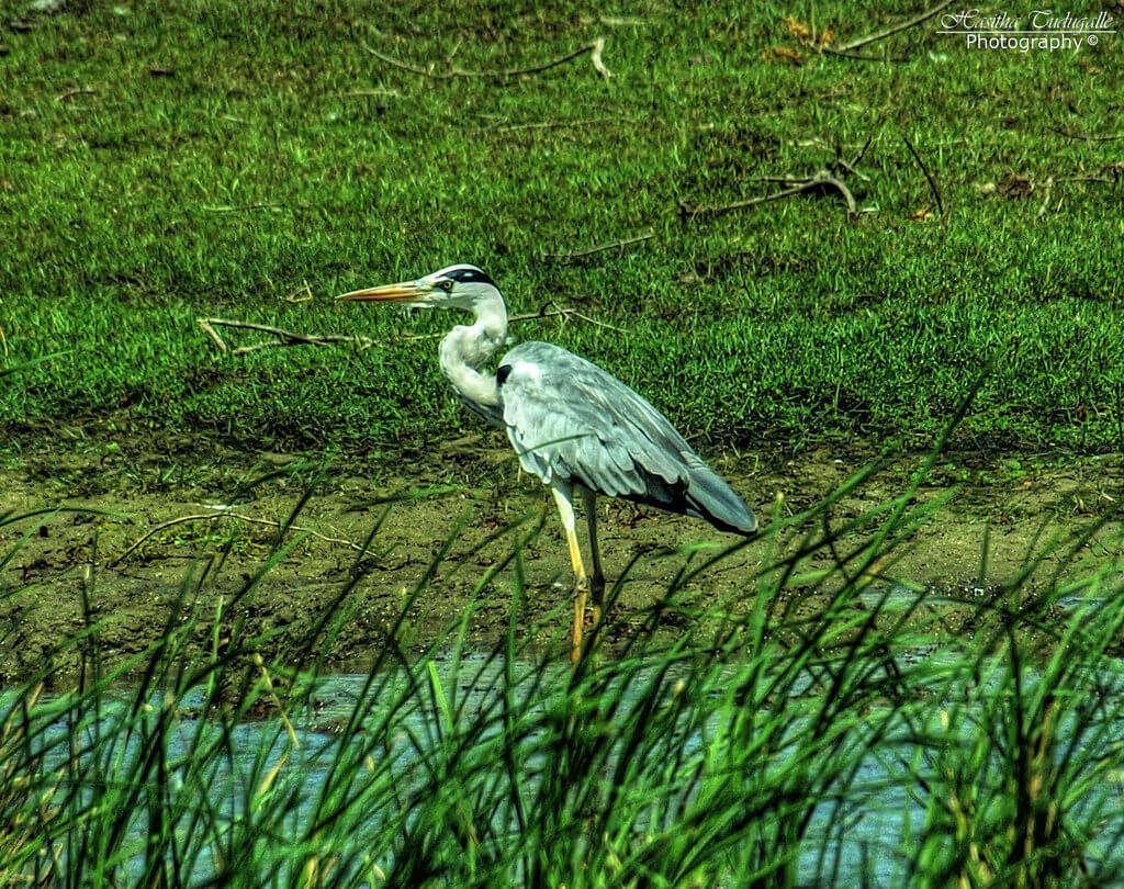 Hambantota: Visit Bundala National Park