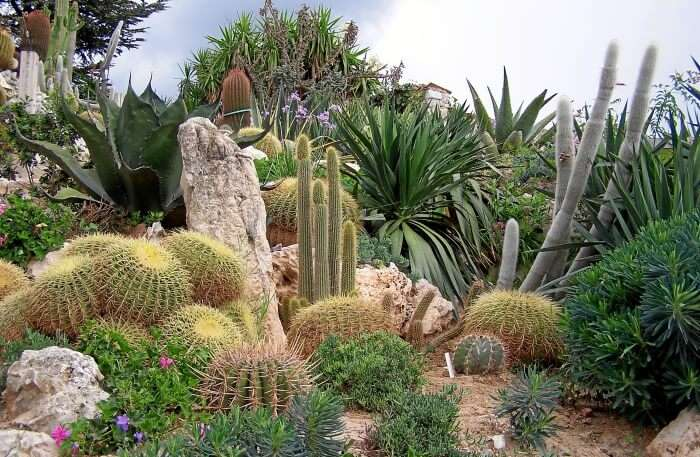 Exotic plants view