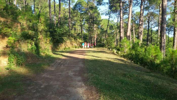 KasauliJungle Hike