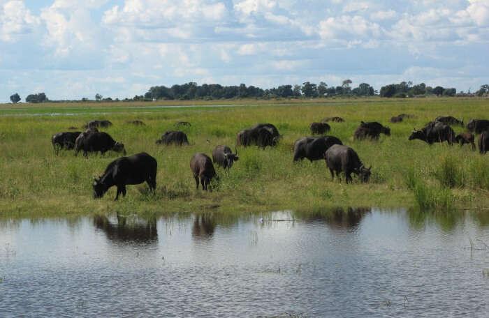 Kavango Zambezi