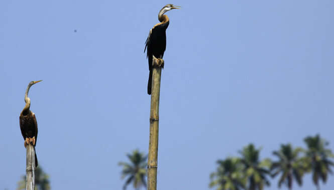 Kumarakom Bird Sanctuary In Alleppey
