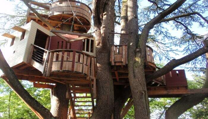 Stop by the tree house