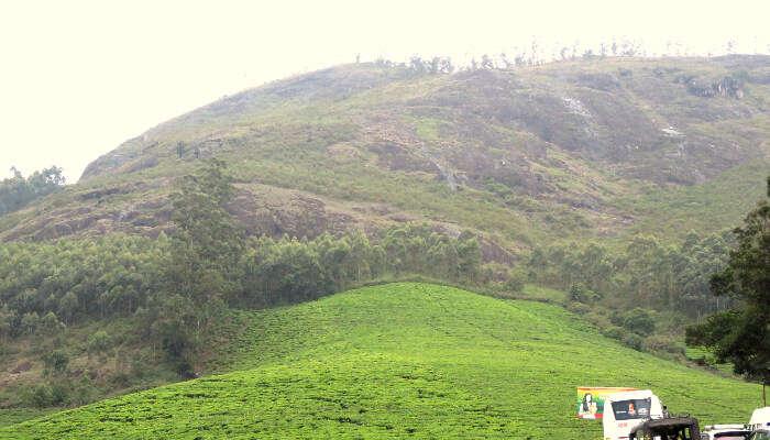 Lakshmi Hills in Munnar