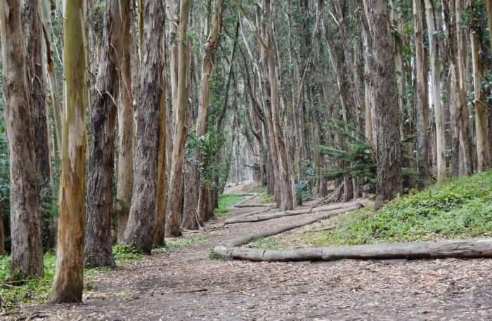 Lovers' Lane at the Presidio