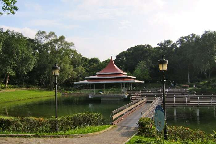 MacRitchie Reservoir Park