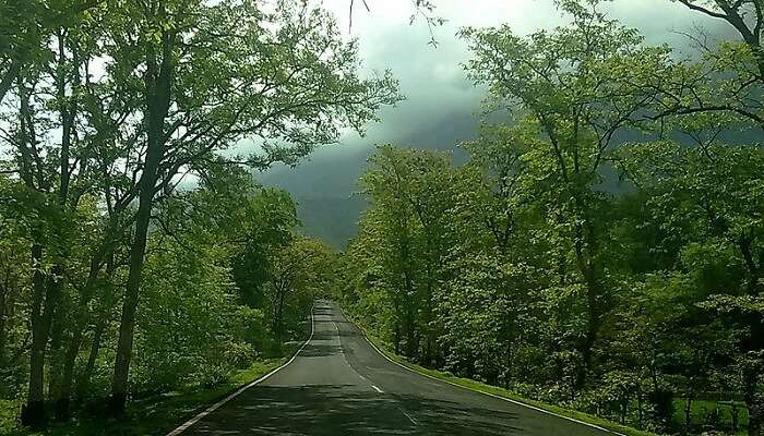 beautiful road in Malshej Ghat