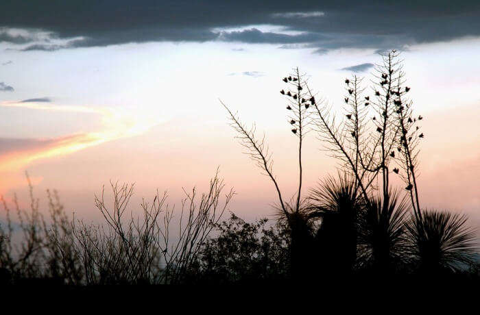 Monsoons in Mudumalai National Park