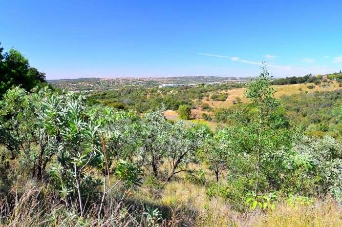 Moreleta Kloof Nature Reserve