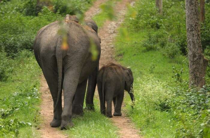 Mudumalai National Park Entry Fee
