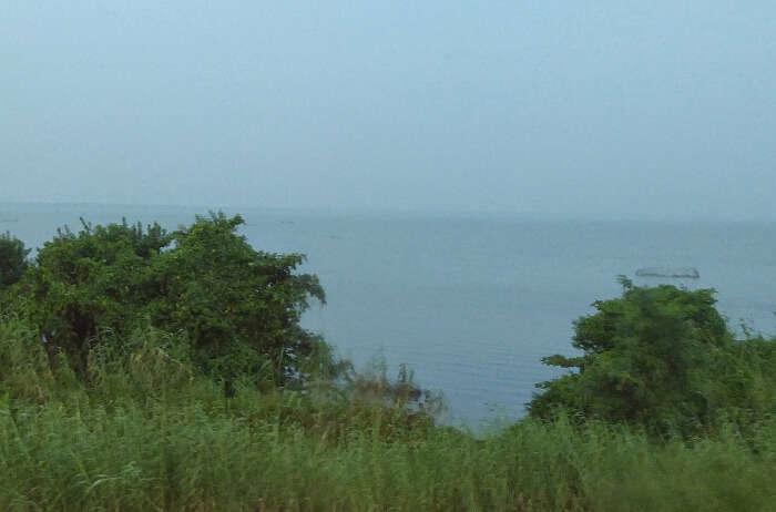 Muthurajawela-Marsh