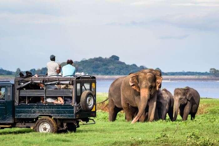 Phezulu Safari