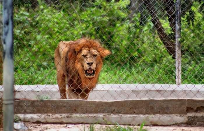 Phnom Tamao Wildlife Rescue Center Tour