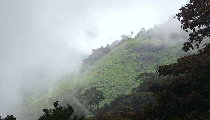 Pothamedu Viewpoint In Munnar