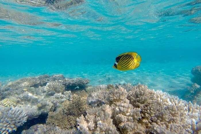 Reef Galiola