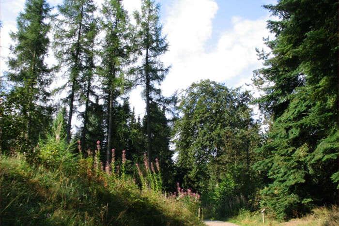 Rold Skov Forest in Denmark