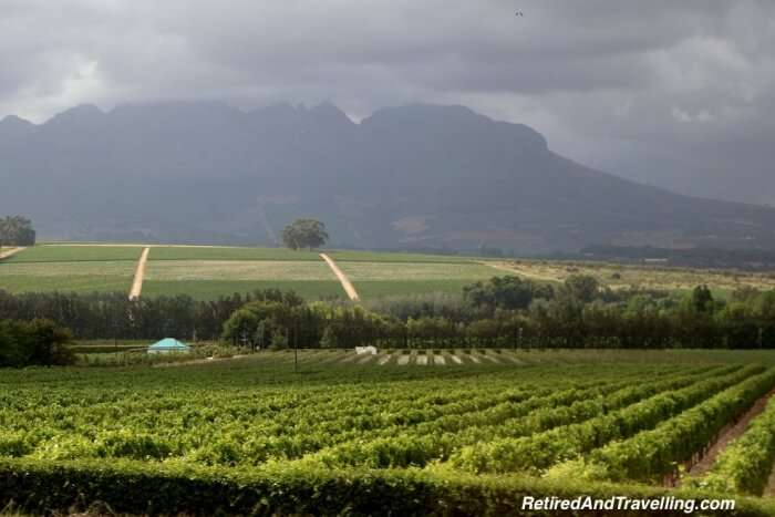 Stellenbosch Walking Tour