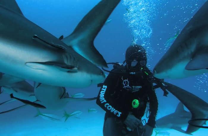 Stuart-Cove's-Dive-Bahamas