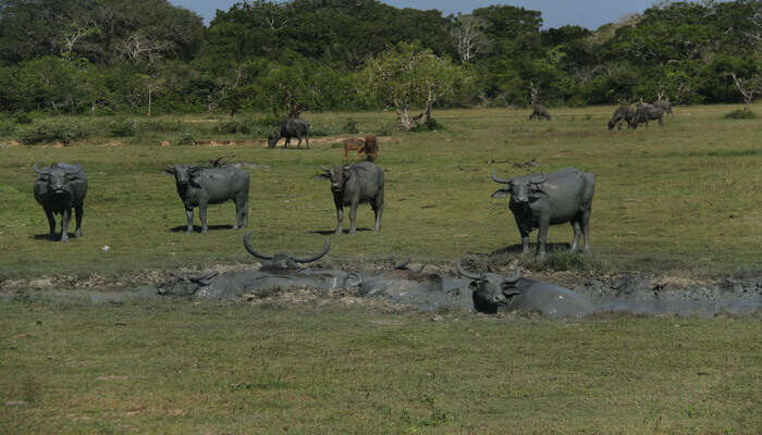 Take a safari tour at Kumana National Park
