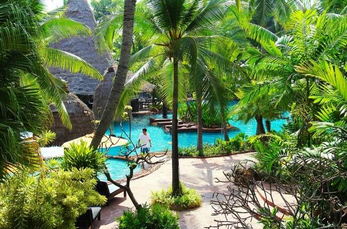 The-Animal-Resort