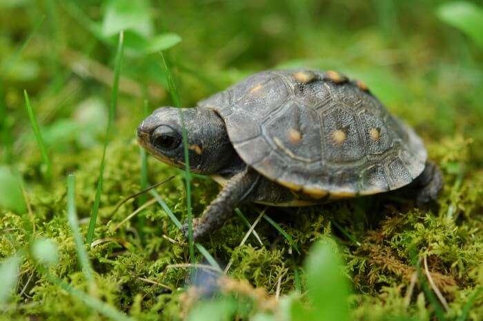 Turtle Hatching In Rekawa