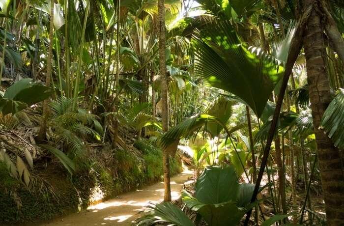 Vallée de Mai, Praslin Island
