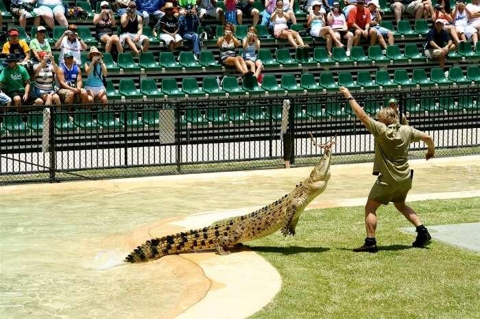 Visit Australian Zoo