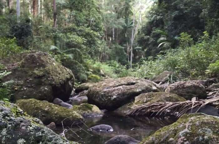 Visit Springbrook National Park