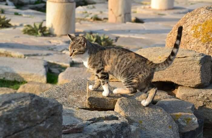 Wildlife In Ancient Greece