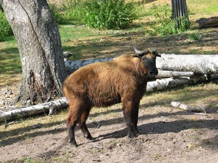 zoo in helsinki in finland