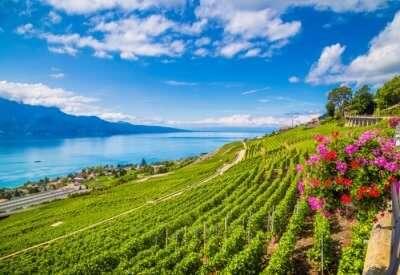 vineyards near paris cover