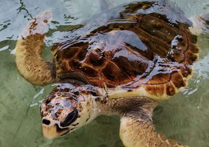 visiting the turtle hatchery