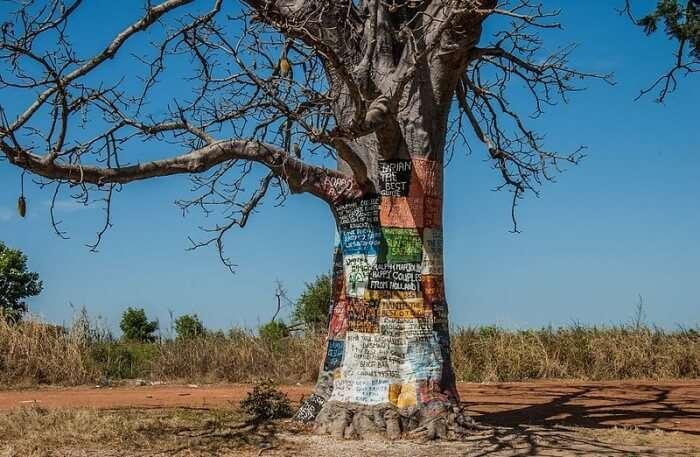 Baobab Tree View