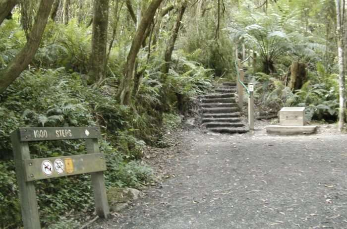 Dandenong-Ranges-National-Park-1000-Steps