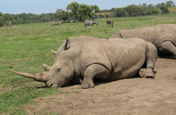 Rhinoceros View