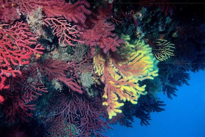 colourful view of the reef