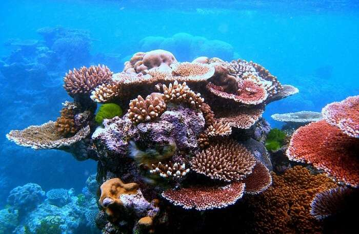 Great Barrier Reef: Gauge the depths