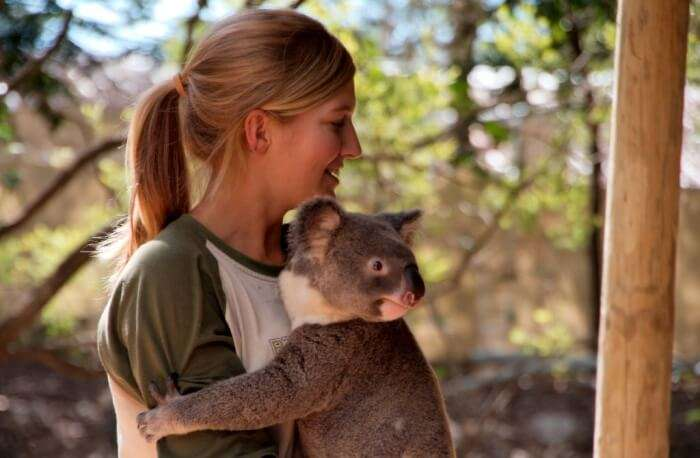 Queensland Hold A Koala