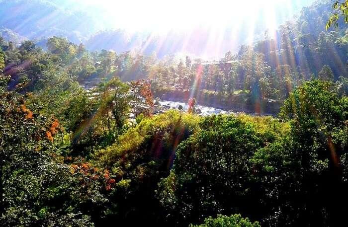 Saramsa Garden