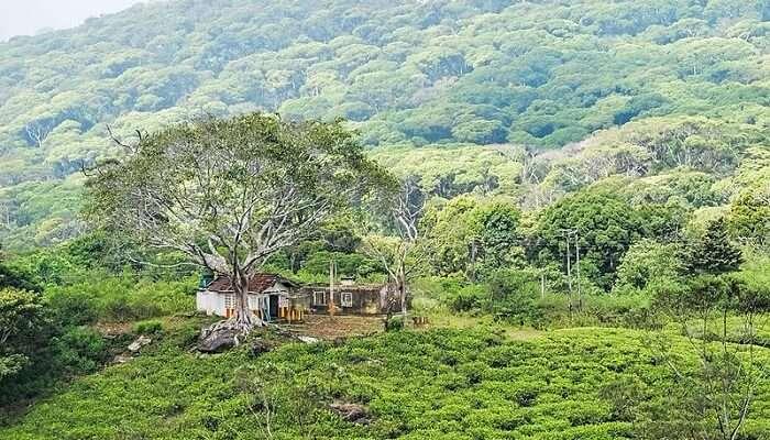 sinharaja bioreserve