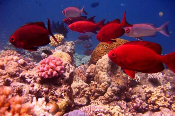 Steve Bommie's Ribbon Reef