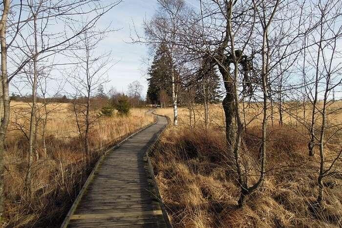 Weserbach to the Hohes Venn