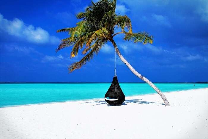 view of a swing hanging from palm tree in maldives