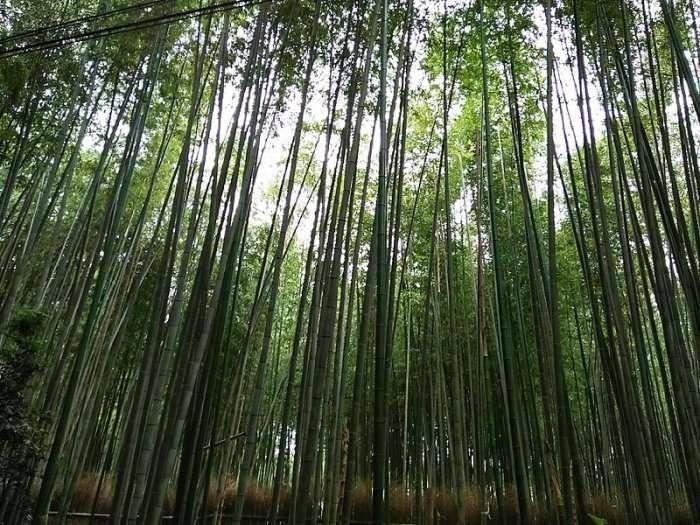 wayanad's famous forest