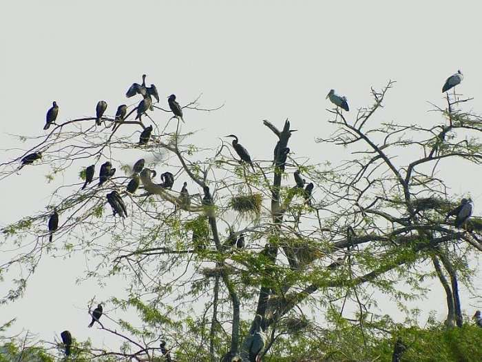 birds in wayanad