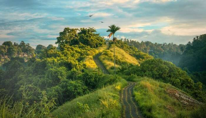 trekking trail amidst lush greenery