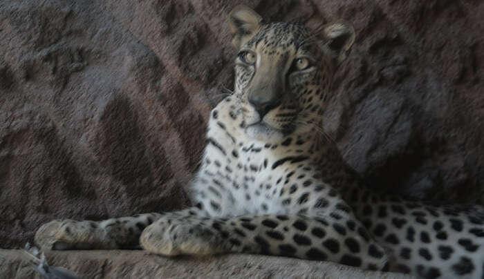 Arabian Wildlife Centre