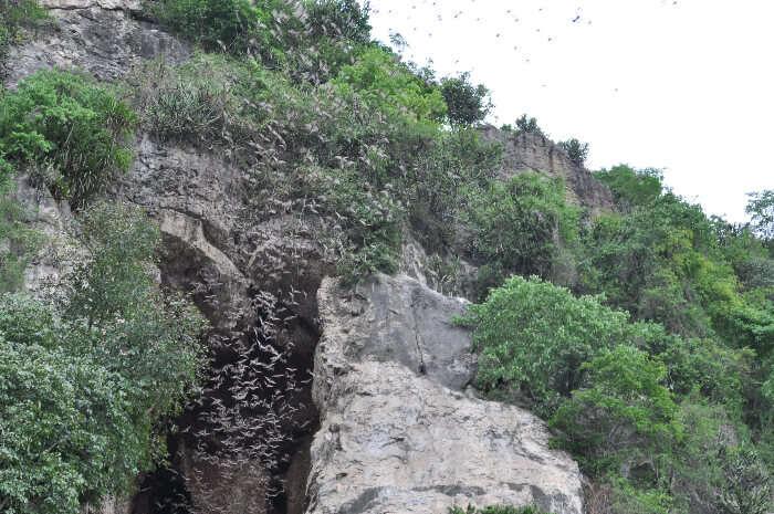 Battambang Bat Cave