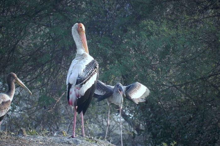 qBharatpur Bird Sanctuary